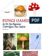 fungi_2013
