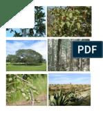 especie vegetal y animal de mexico.docx