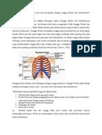 korelasi antara otot-otot pernapasan dengan rongga thorax dan mediastinum