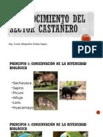 Reconocimiento Del Sector Castañero
