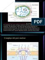 Nucleo y Cromatina