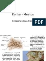 Konka - Meatus
