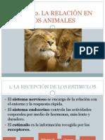 La Relación en Animales