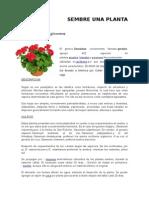SEMBRE-UNA-PLANTA.docx