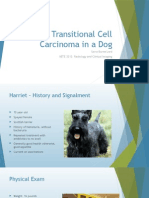transitional cell carcinoma in a dog