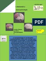Introducción básica y elemental de Neuropsicologia