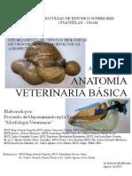 Apuntes Anatomía Veterinaria Básica