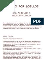 NEUROPSICOLOGIA - Estudio Por Lobulos