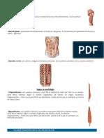 Clasificación de Musculos