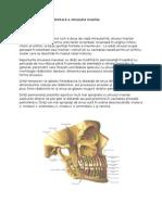 Afecţiuni de Origine Dentară a Sinusului Maxilar