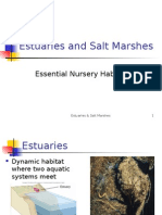 02 - Estuaries & Salt Marshesasdasd - Web