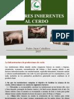 Creacion de Cerdos