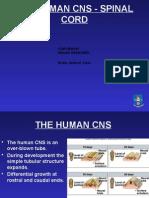 4 bms153 human brain 1 web.pptx