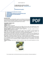 demanda-chirimoya Peru