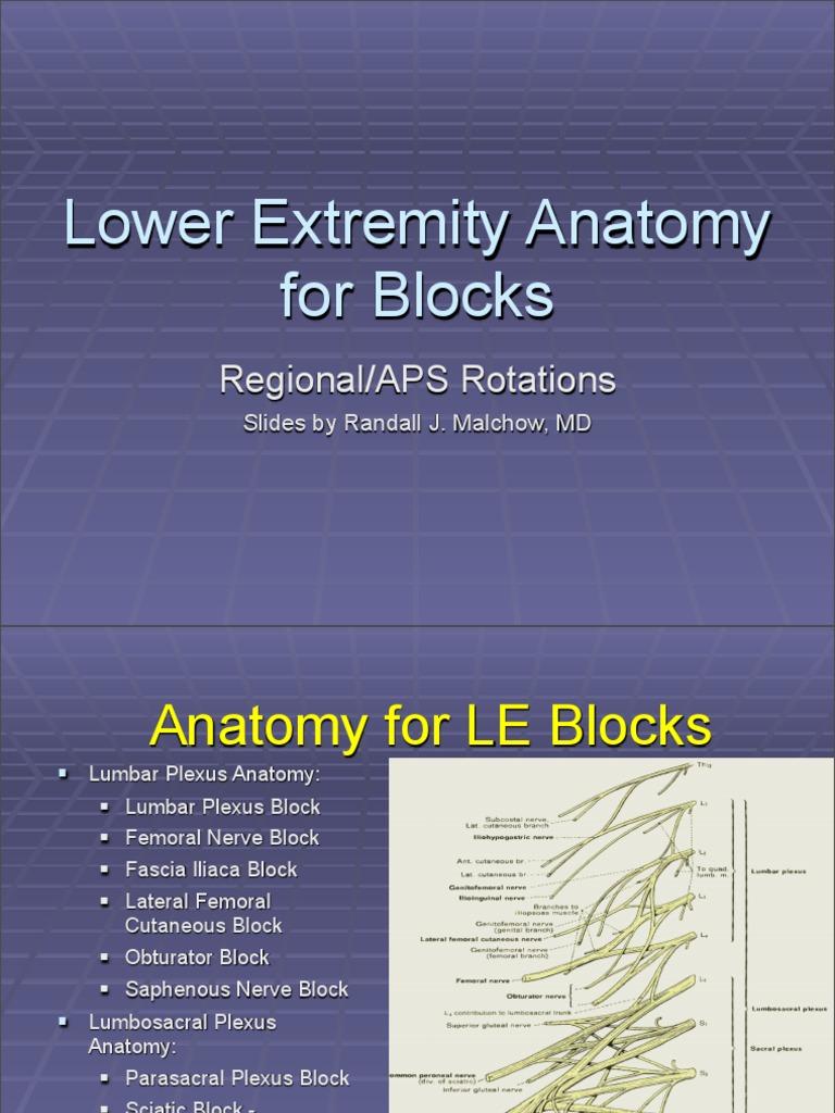 Lower Extremity Anatomy Human Leg Lower Limb Anatomy