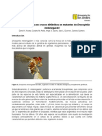 InformeDrosophila Final