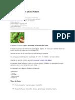Aclareo de Frutas en Árboles Frutale1
