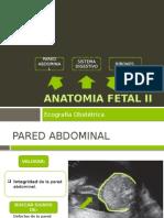 Anatomia Fetal II