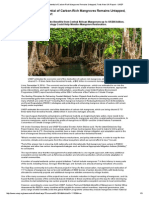 Full Economic Potential of Carbon-Rich Mangroves Remains Untapped, Finds New UN Report - UNEP
