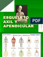 Esqueleto Axil y Apendicular