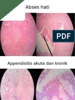patologi_anatomi