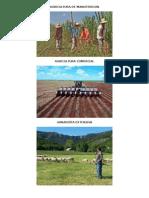 Agricultura de Manutencion
