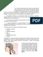 Resumen de Sistema Endocrino.pdf
