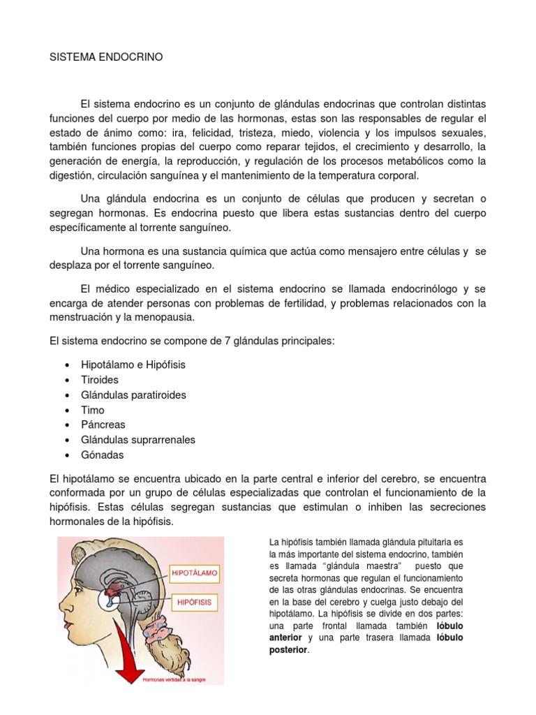 resumen de sistema endocrino pdf
