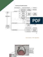 (DD13-14) Dental Anatomy