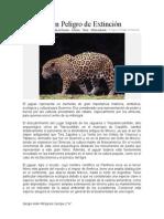 El Jaguar en Peligro de Extinción