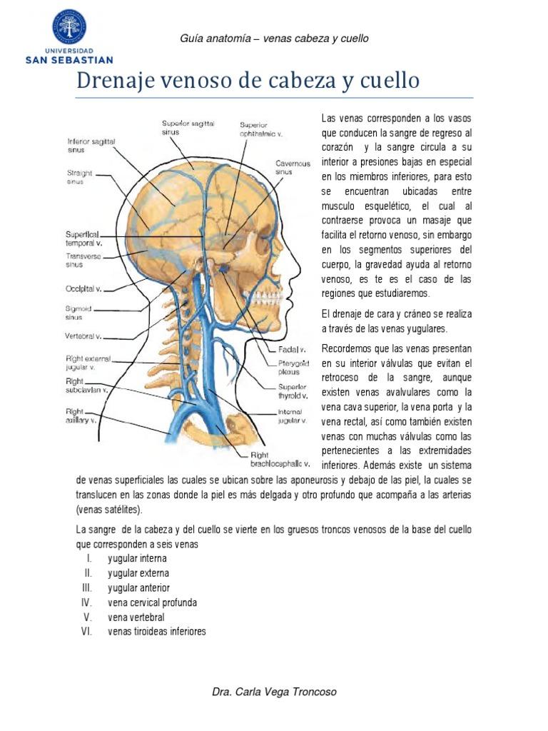 18 - Drenaje Venoso de Cabeza y Cuello
