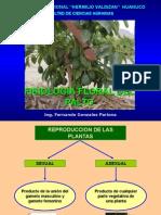 002 Palto-Fisiología Floral