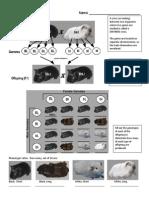 dihybrid guinea pigs