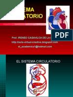 sistemacirculatorioireneo-130329085933-phpapp02