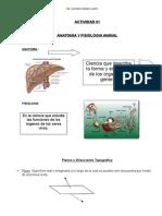 Clases Anatomia