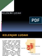 KELENJAR LUDAH