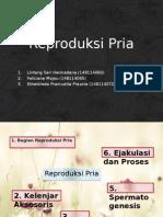 Reproduksi Pria