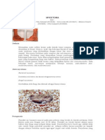 misetoma-jamur subkutan