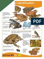 ARG Amphibian ID Guide 2014
