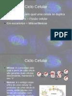 Ciclo de Divisão Celular - Mitose
