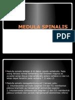 Medula Spinalis