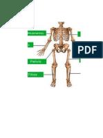 huesos alvaro.docx