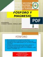 fosforo y magnesio
