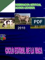 3 Ciclo Estral. Vacas