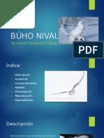 Búho Nival