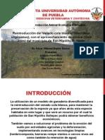 proyecto produccion ecologica