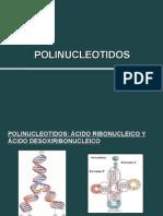 NUCLEOTIDOS (1) (1)