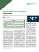 Micro Greffage Du Chataignier(1)