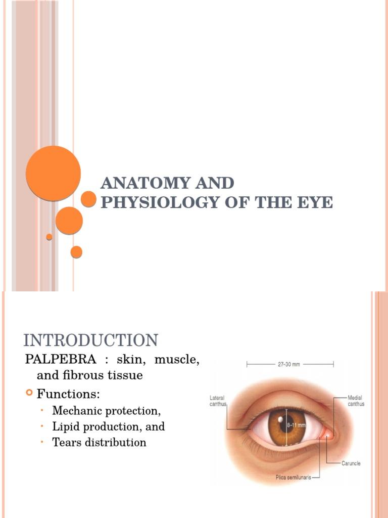 Anatomy and Physiology of the Eye | Cornea | Human Eye